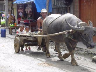 Boys following a buffalo cart (North Sumatra, 2004)