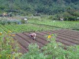 Gardening (North Sumatra, 2012)