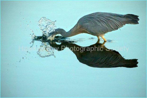 Haumoana Bird Life - Greg Thompson