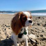 Beach Diva Rory