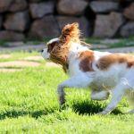 Running Rory