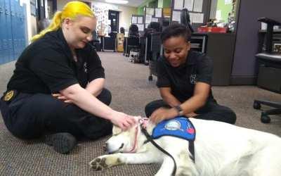 Secrets of a Comfort Dog Revealed