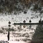 Pond Water by Micah Lake
