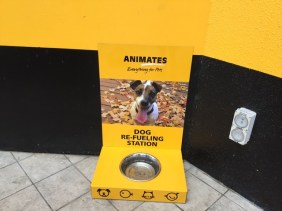 Water for visiting dogs