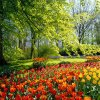 1600X1200 Free Spring Backgrounds Hd Wallpaper