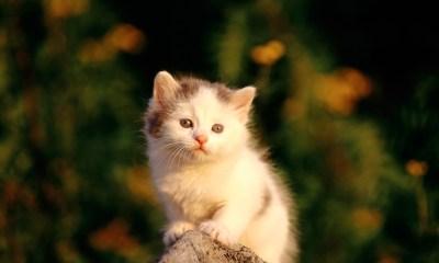 Cute Kitten Looking It's Mom