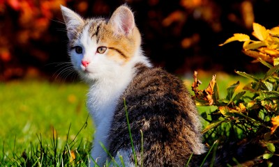 Cat On Green Grass For Pc