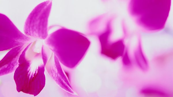 Flowers Images For Desktop Background