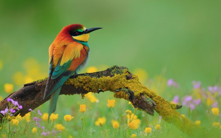 3D wallpaper of birds download hd