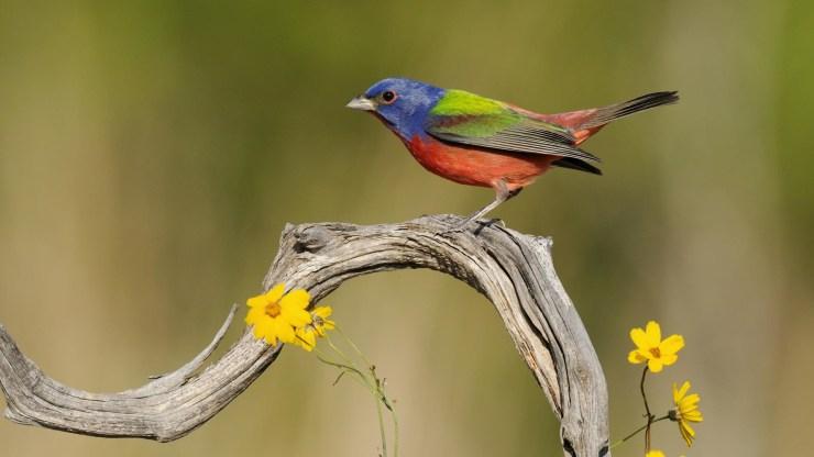 beautiful birds wallpaper hd