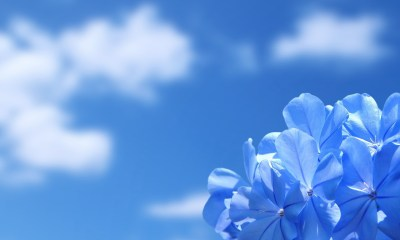 Desktop flower blue wallpapers