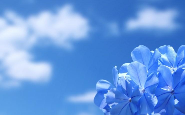 Desktop flower blue wallpapers