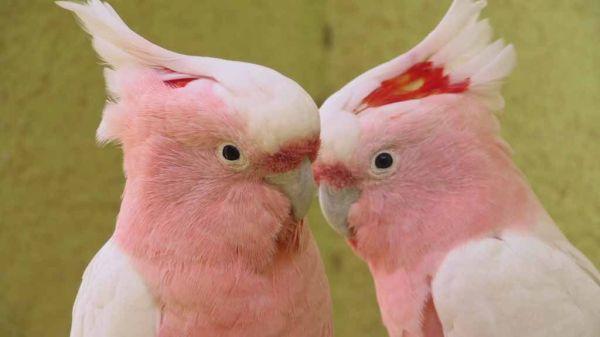 most beautiful birds wallpaper