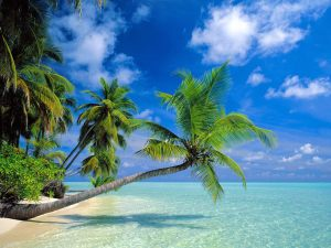 beach backgrounds for computer