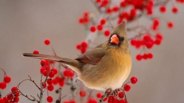 beautiful bird photos