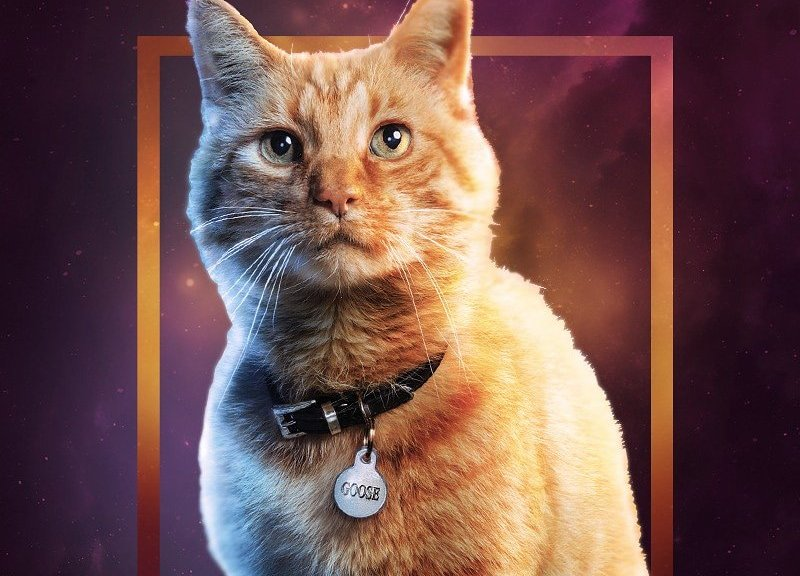 Marvel CAT Wallpaper for Mobile
