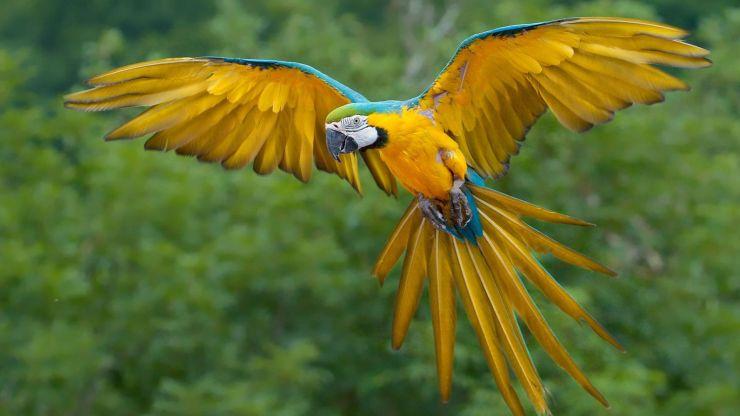 bird desktop wallpaper