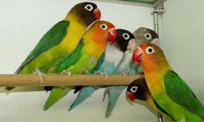birds free wallpaper download
