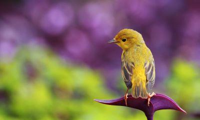 birds hd photos