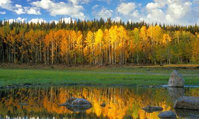 autumn scene wallpaper