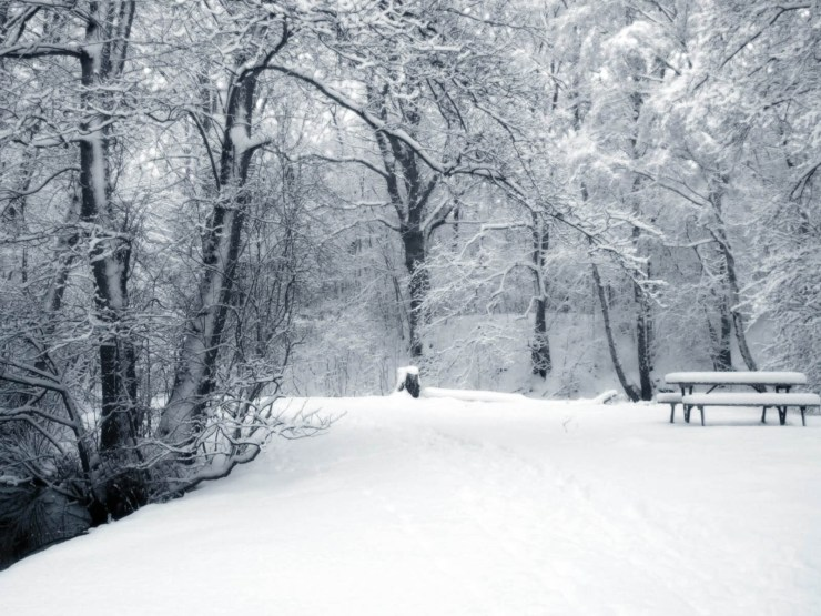Free wallpaper winter scenes windows desktop 1600p