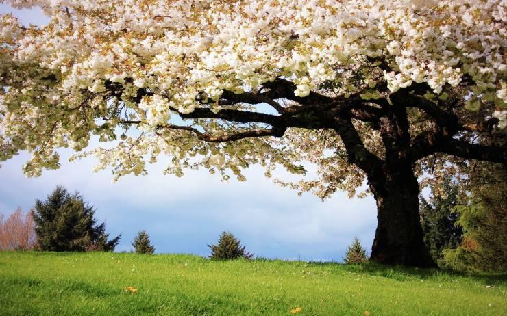 HD Spring images for wallpaper desktop 1920p