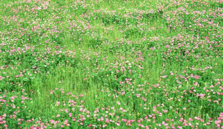 HD Spring nature wallpaper desktop 1439p
