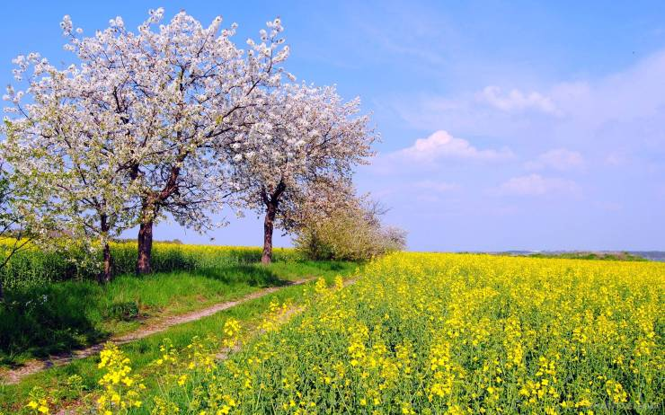 HD Spring widescreen wallpaper smartphone desktop 1920p