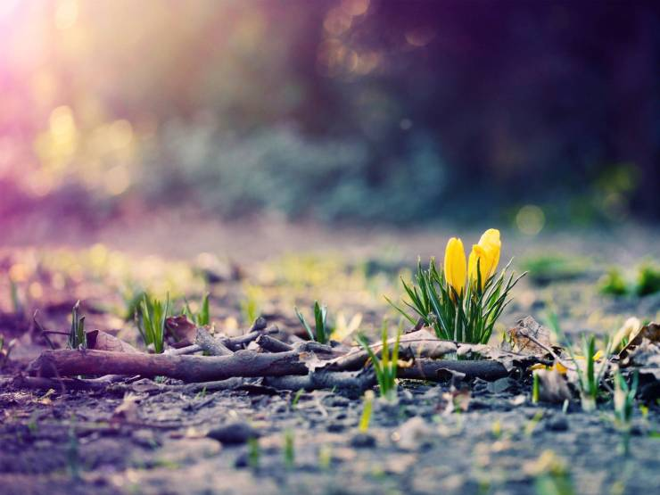 HD Wallpaper for desktop spring android, Pc Desktop 1600p