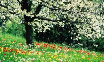 Spring desktop images windows desktop 1600p