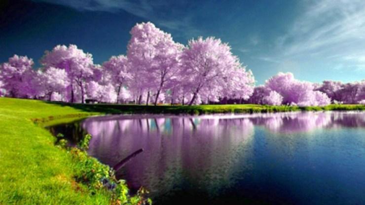 beautiful trees spring wallpaper