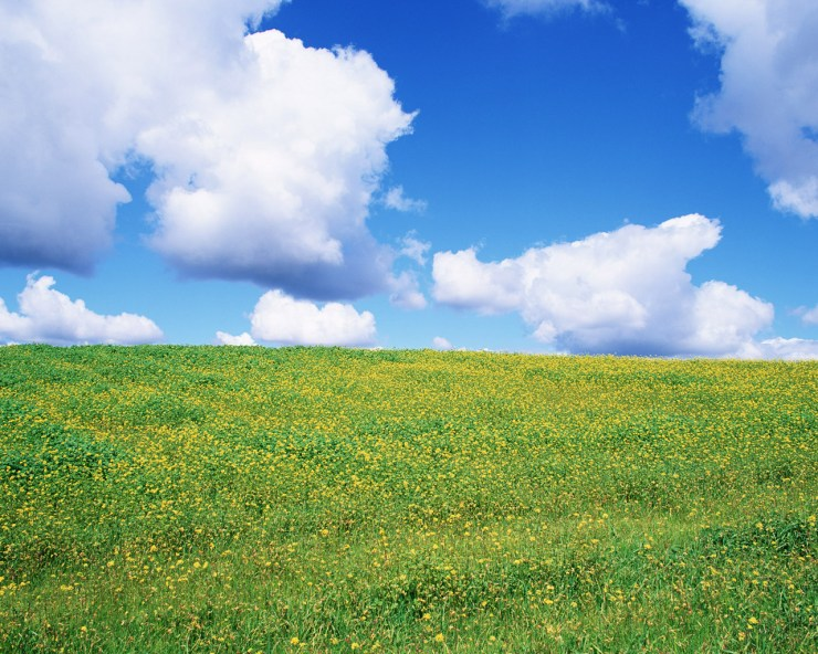fields of wildflowers spring wallpaper