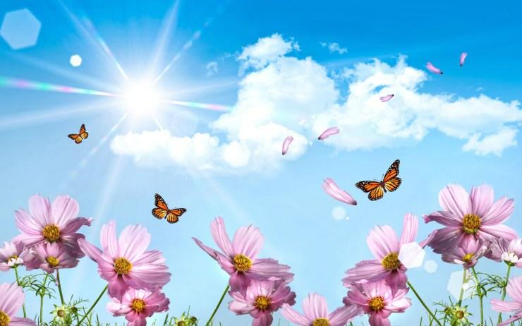 free desktop wallpaper springtime