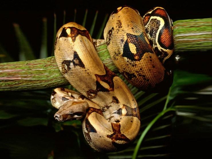 free snake pics