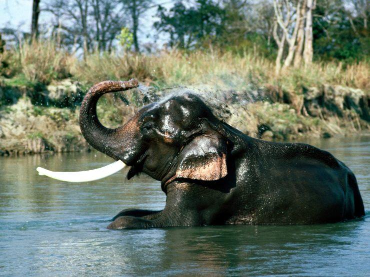 funny elephant wallpaper
