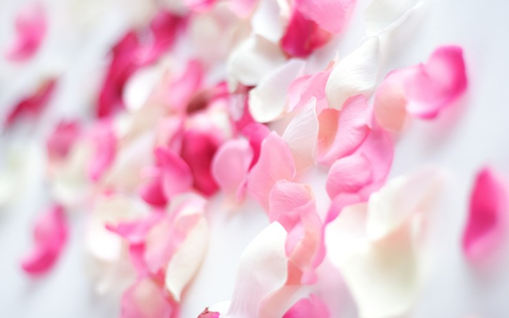 hd flowers wallpapers free download
