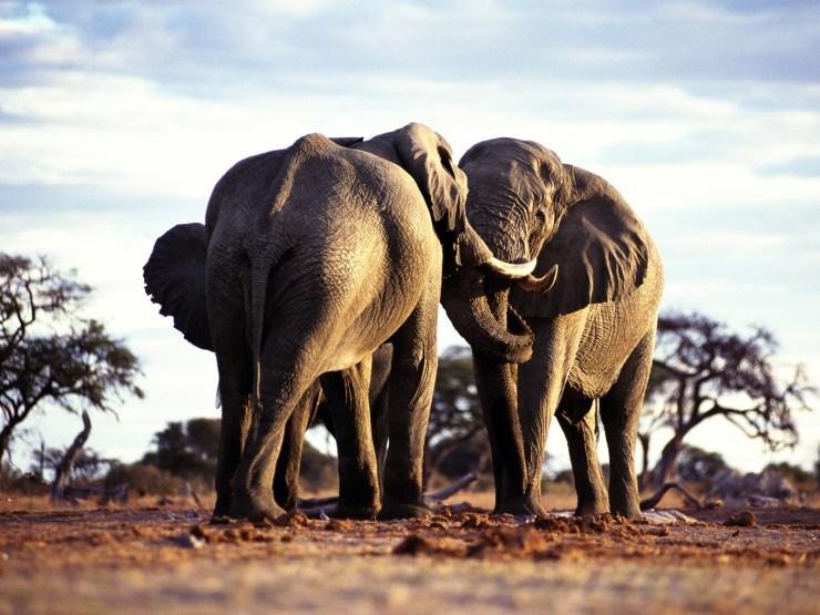 imaginative elephant wallpaper