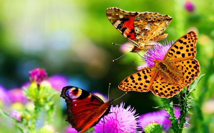 nature flower wallpaper free download
