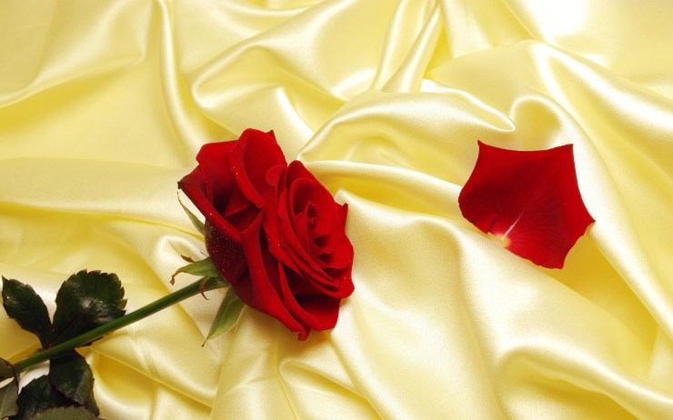 rose flowers wallpapers