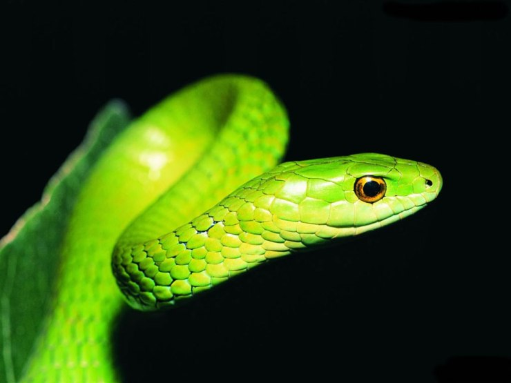 snake hd images