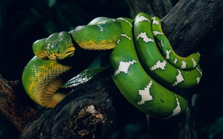 snake photo gallery