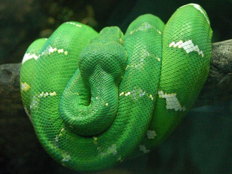 snake photos free