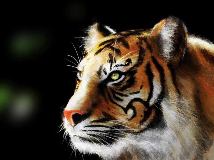 tiger pc wallpaper