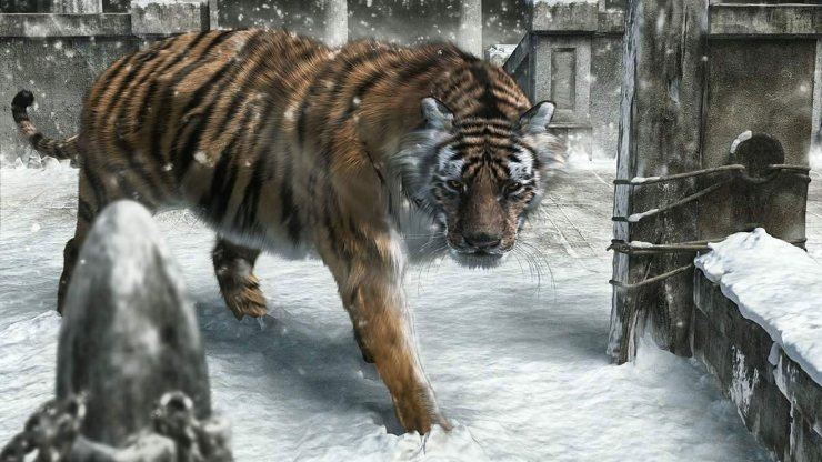 tigers pictures free