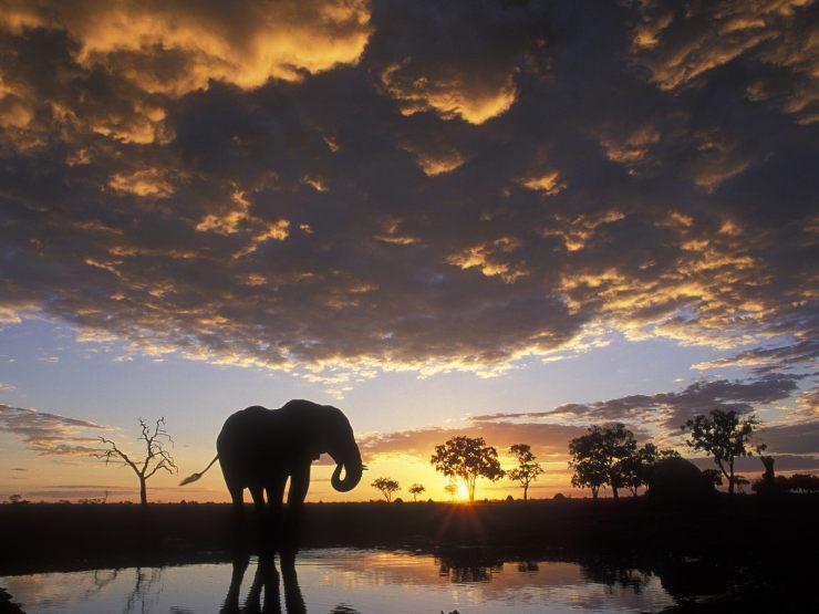 wallpaper elephant