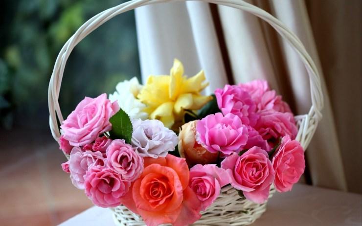 wallpaper flower rose