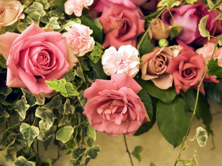 wallpaper flowers rose