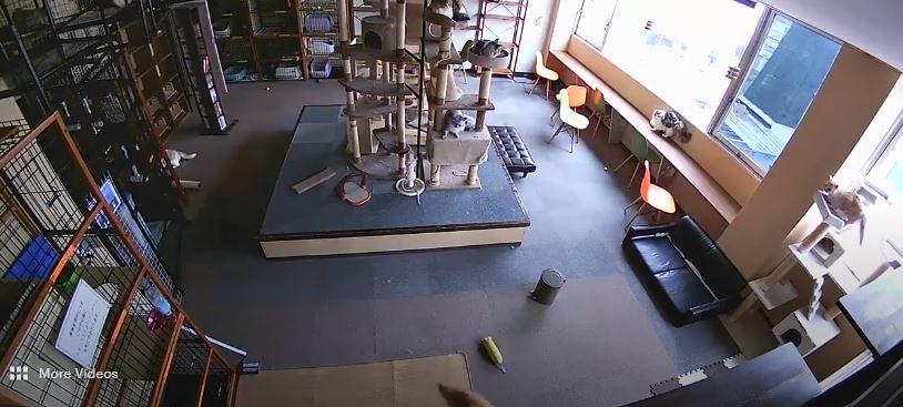 Gatos reaccionan a terremoto segundos antes de que se produzca