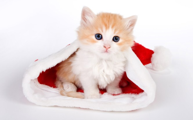 Cute Baby Cat Wallpaper 3173 Wallpapers Hd For Background From