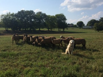 dog-with-flock-beautifulday
